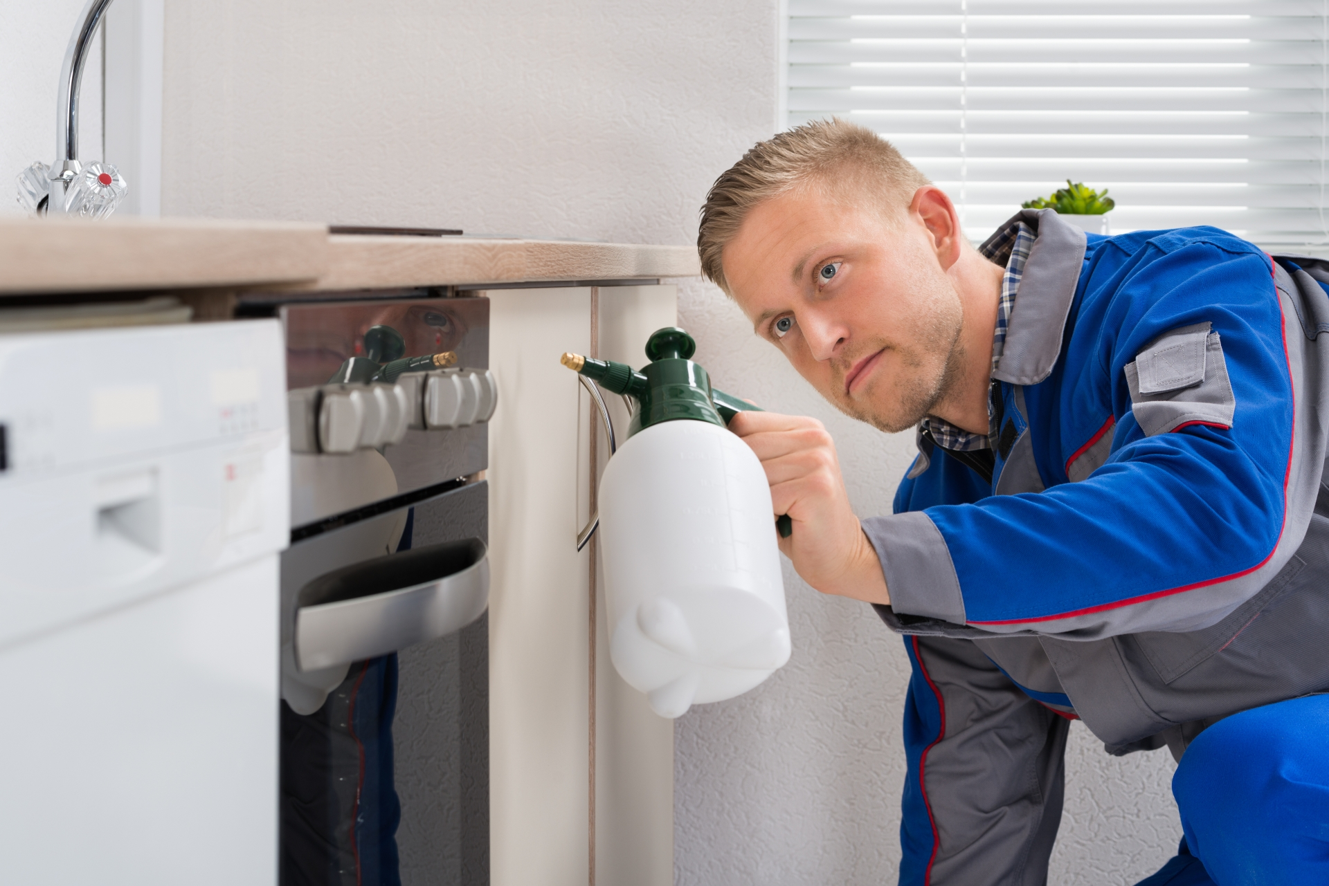 Pest Inspection, Pest Control in Hampstead, NW3 . Call Now 020 8166 9746