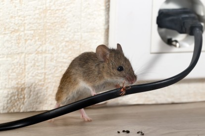 Pest Control in Hampstead, NW3 . Call Now! 020 8166 9746