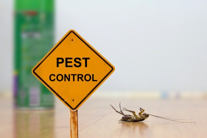 Pest Contol in Hampstead, NW3 . Call Now 020 8166 9746